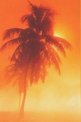Polynesian-Palm
